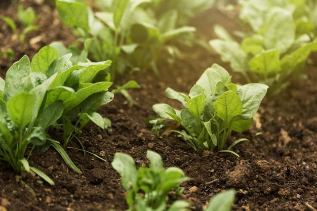 high-angle-plants