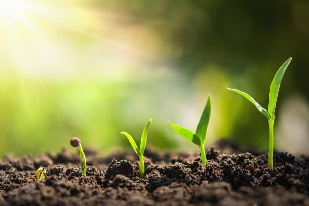 plant-seeding-growing